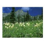 Beargrass at Eunice Lake, Mt. Rainier NP, WA, Postcards