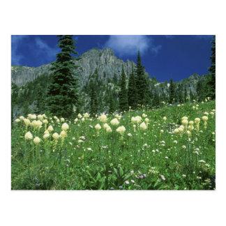 Beargrass at Eunice Lake, Mt. Rainier NP, WA, Postcard