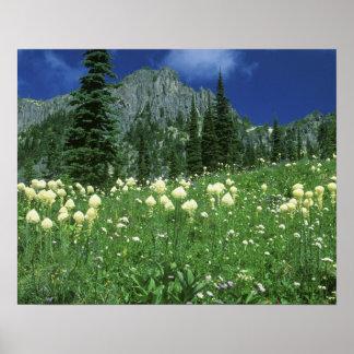 Beargrass at Eunice Lake, Mt. Rainier NP, WA, Poster