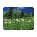 Beargrass at Eunice Lake, Mt. Rainier NP, WA, Vinyl Magnets