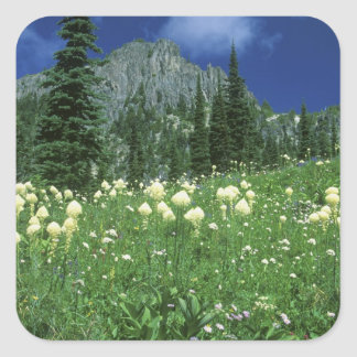Beargrass at Eunice Lake, Mt. Rainier NP, WA, Square Sticker