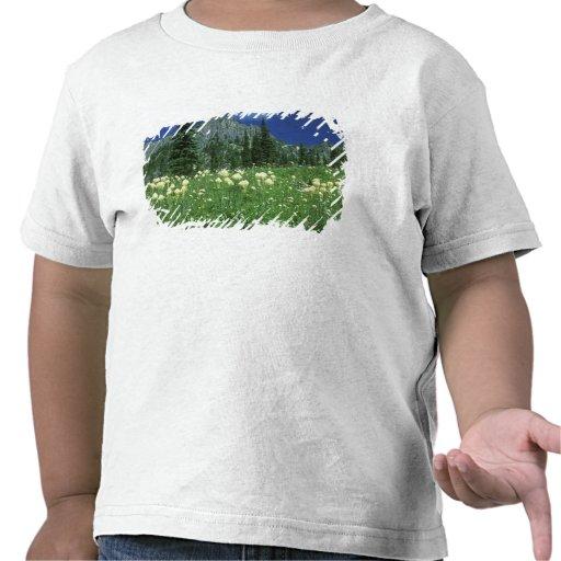 Beargrass at Eunice Lake, Mt. Rainier NP, WA, T Shirts
