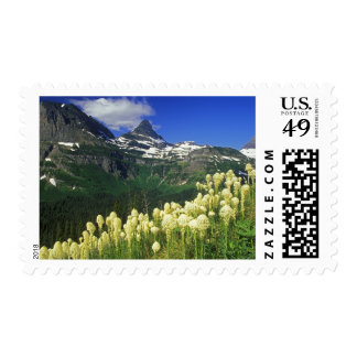 Beargrass at Logan Pass in Glacier National Park Postage