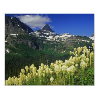 Beargrass at Logan Pass in Glacier National Park Poster