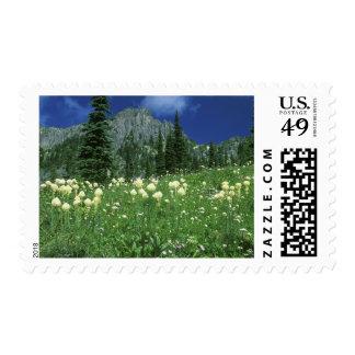 Beargrass en el lago eunice, el Monte Rainier NP, Timbres Postales