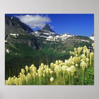 Beargrass en el paso de Logan en Parque Nacional G Impresiones