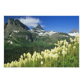 Beargrass near Logan Pass in Gacier National Photo Print