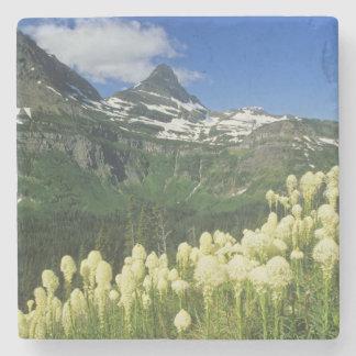 Beargrass near Logan Pass in Gacier National Stone Coaster
