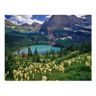 Beargrass sobre el lago Grinnell en el muchos Postal