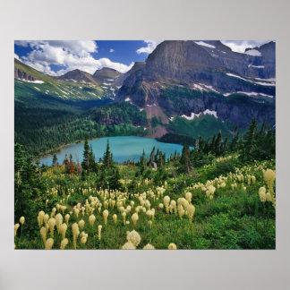 Beargrass sobre el lago Grinnell en el muchos Póster