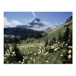 Beargrass (Yucca sp.) Postcard