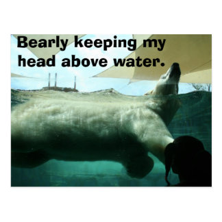 Bearly keeping my head above water. postcard