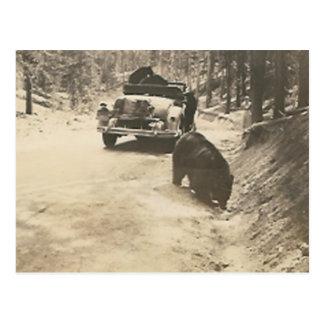 bears at car postcard