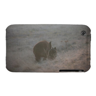 Bears Walking at Sunset iPhone 3 Cover