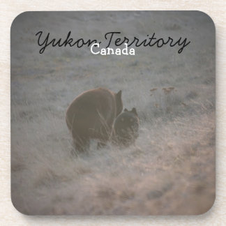 Bears Walking at Sunset; Yukon Territory Souvenir Drink Coaster