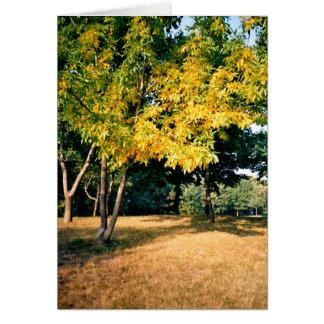 Beatiful Autumn Tree Card