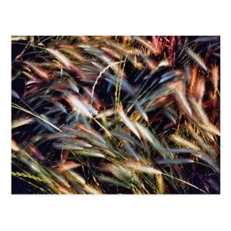 Beatiful Colored Grass Postcard