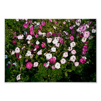 Beatiful Flowers Poster