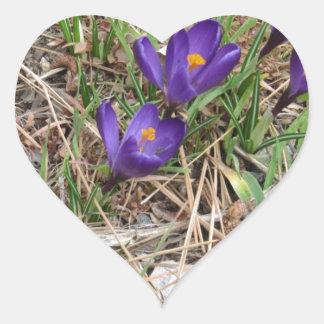 Beatiful Purple Mountain Iris 2 Heart Sticker
