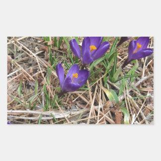 Beatiful Purple Mountain Iris 2 Rectangular Sticker