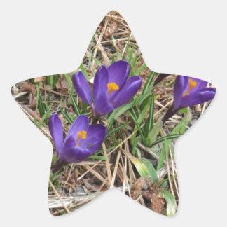 Beatiful Purple Mountain Iris 2 Star Sticker