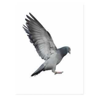 Beating wings postcard