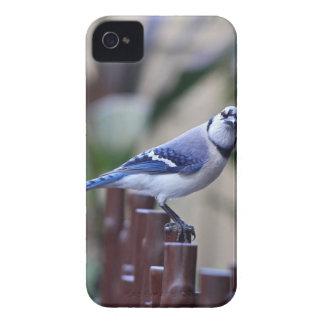 Beatitude of a Bluejay I-FA iPhone 4 Case-Mate Case