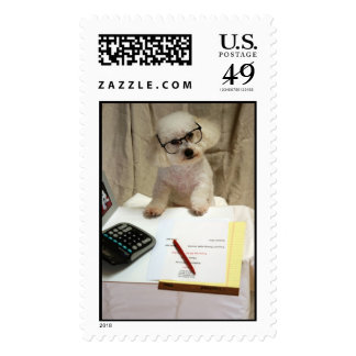 Beau, a Bichon Frise is Hard at Work Postage