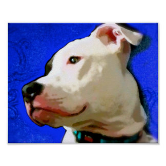 Beau the Pit Bull Terrier Poster