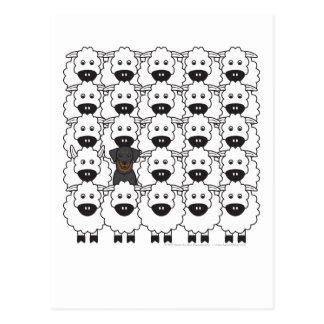 Beauceron en las ovejas tarjetas postales