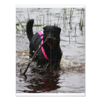 beauceron in water.png magnetic card