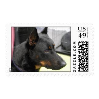 Beauceron Postage Stamp