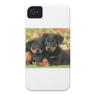 Beauceron Puppies Best Buds iPhone 4 Case