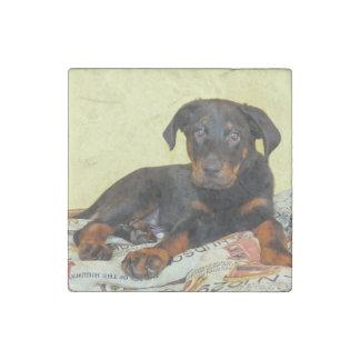 beauceron puppy stone magnet