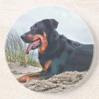 Beauceron Sandstone Coaster