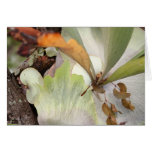 Beauteous Bromeliad Card
