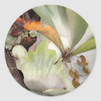 Beauteous Bromeliad Classic Round Sticker