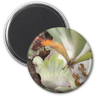 Beauteous Bromeliad Magnet