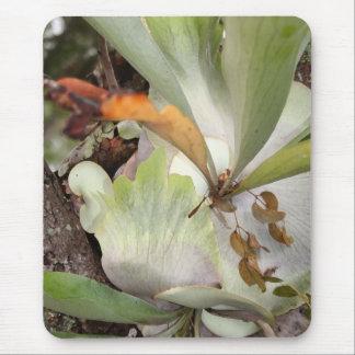 Beauteous Bromeliad Mouse Pad