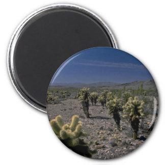 Beauties In A Desert Fridge Magnets