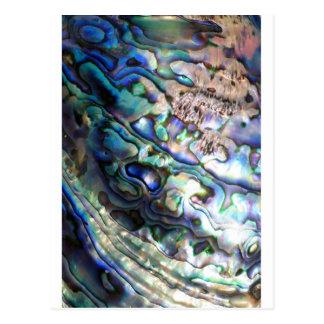 Beautiful abalone shell post card