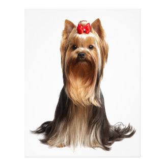 Beautiful adorable dog letterhead