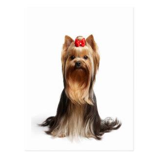 Beautiful adorable dog postcard