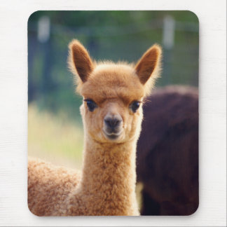 Beautiful Alpaca Mousepad
