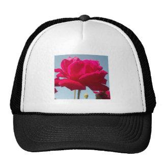 Beautiful Amazing Hakuna Matata Rose For the Bride Mesh Hats