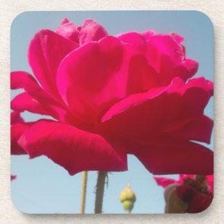Beautiful Amazing  Rose For the Bride Beverage Coaster
