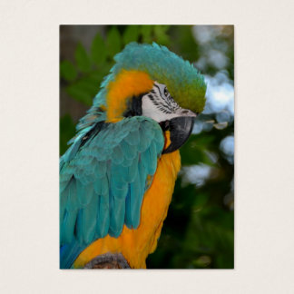 Beautiful and colorful Macaw Business Card