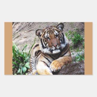 Beautiful and Majestic Bengal Tiger Photo Sketch Rectangular Sticker