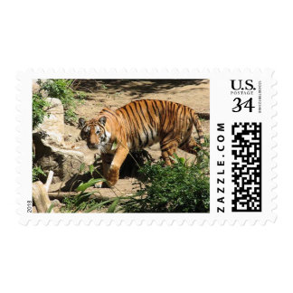 Beautiful and Majestic Bengal Tiger Postage