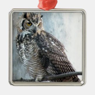 Beautiful and Regal Female Great Horned Owl Ornaments